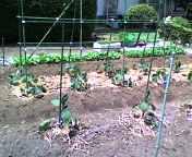200705121-veg.jpg
