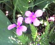 20070512flower.jpg