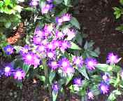 20070512flower 1.jpg
