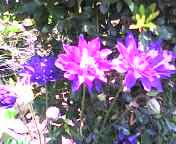 20070512flower4.jpg