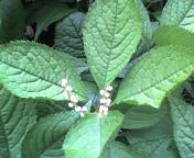20070513flower.jpg