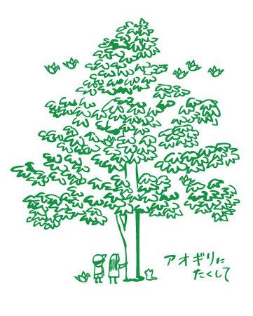 アオギリの木.jpg