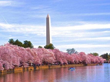 ポトマックの桜.jpg